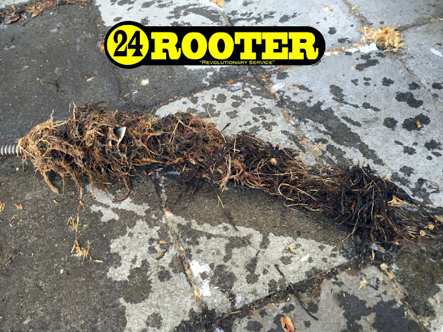 drain roots