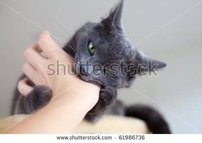 Cara Mengobati Luka Infeksi Akibat Cakaran Dan Gigitan Kucing