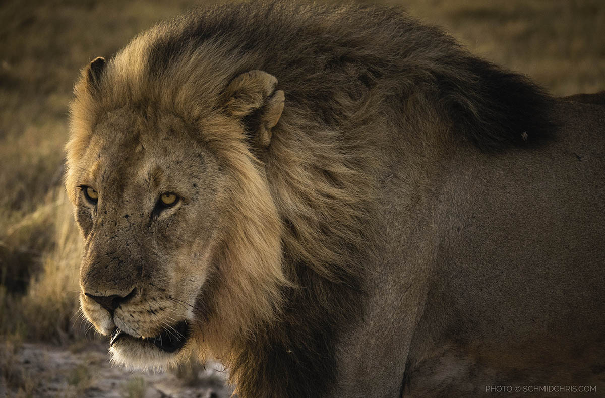 Park Cameras Blog: Photographing African Wildlife with Sony