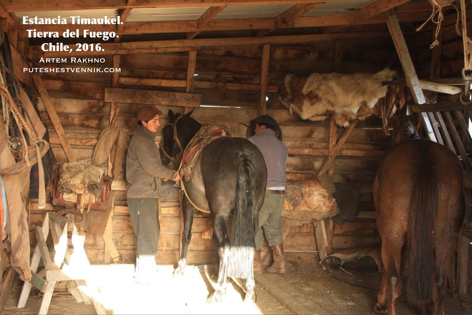 Гаучо в конюшне и лошадь