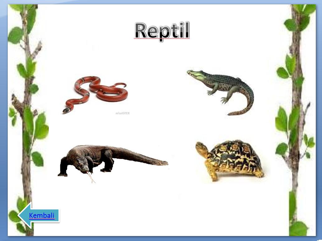 Contoh Hewan Reptil Yang Termasuk Omnivora Contoh Ia