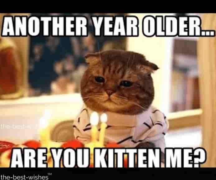 cute birthday memes for him with cat