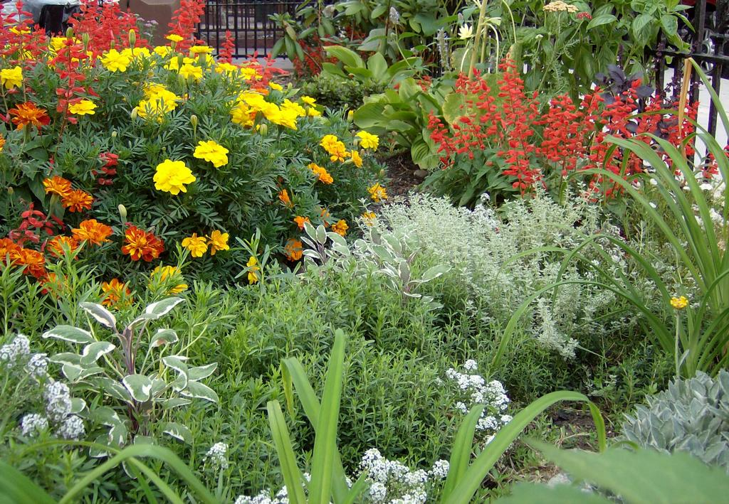 112 plantas jardim mediterraneo à Árvore Como Construir um Jardim