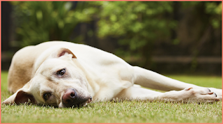 Dog Food Poisoning
