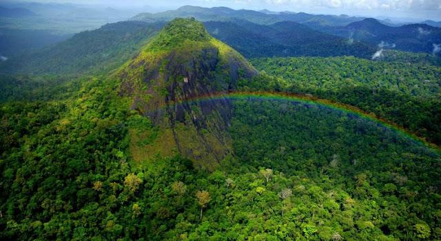Vista do parque Nacional Montanhas do Tumucumaque, no Amapá. (Foto: Acervo ICMBIO)