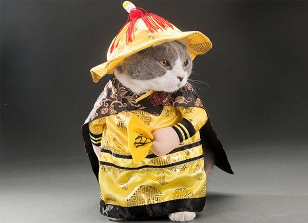 Mua set quần áo hoàng thượng cho chó, mèo siêu đẹp