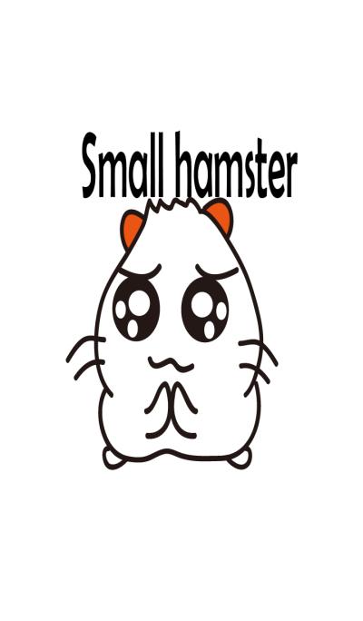Lovely white hamster