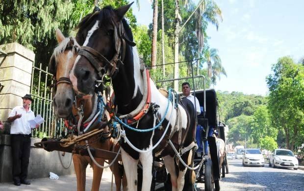 Petrópolis decreta fim das atividades com tração animal em charretes