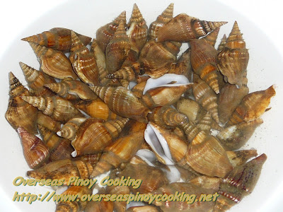 Conch Shell, Sea Snail