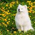 Top 6 de las razas de perros más peludas ¡Te derretirás con ellas!