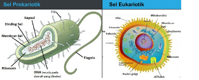 Perbedaan Sel Prokariotik dan Sel Eukariotik dalam bentuk tabel