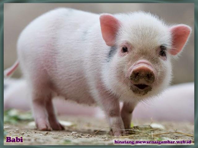 gambar babi kecil lucu imut