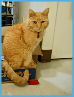 Carmine is sitting on one of his Chewy.com boxes.
