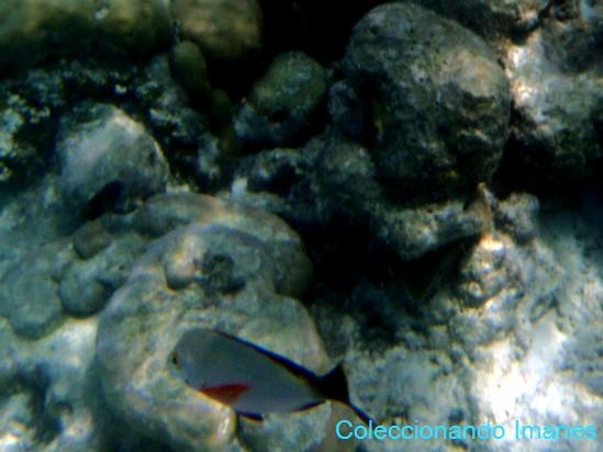 pez con aleta roja