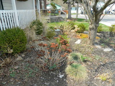 Birch Cliff Toronto Scarborough Front Yard Spring Garden Cleanup Before by Paul Jung Gardening Services a Toronto Gardening Company