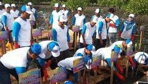 PT. Pertamina Lakukan Pelepasan Anak Penyu dan Transplantasi Terumbu Karang di Kota Pariaman