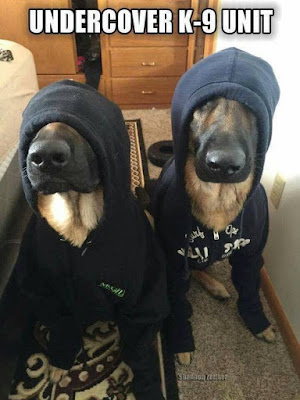 Dog Humor : Undercover K-9 Unit