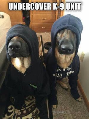 Dog Humor : Undercover K-9 Unit