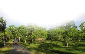 ভাল খবৰঃ  বিশ্বশ্ৰেষ্ঠ চাহৰ খিতাপ আৰ্জিলে অসমৰ থলুৱা আত্ম-সহায়ক চাহ উৎপাদক গোটৰ 'অৰ্চনা ব্লেক টী'য়ে