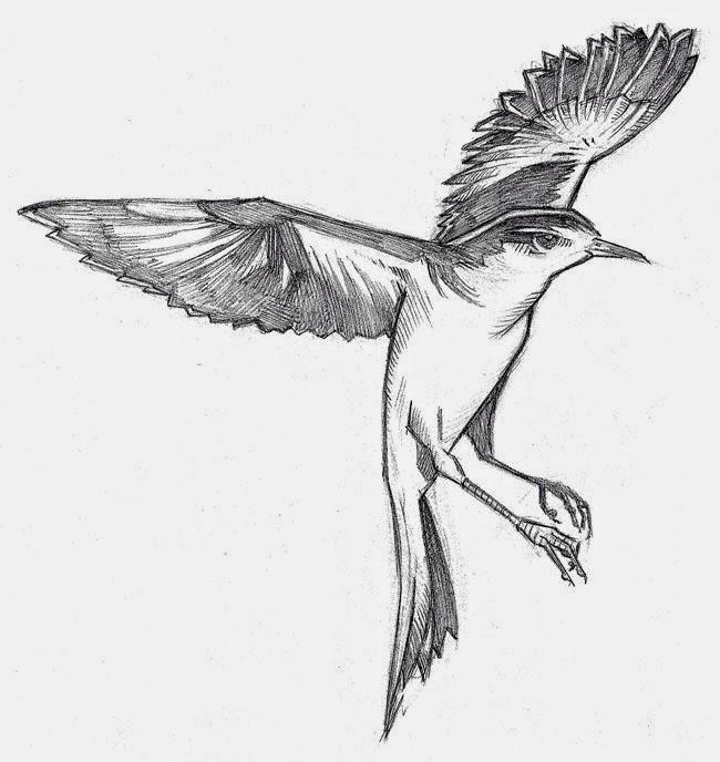 To Kill A Mockingbird : Treasures in the tree