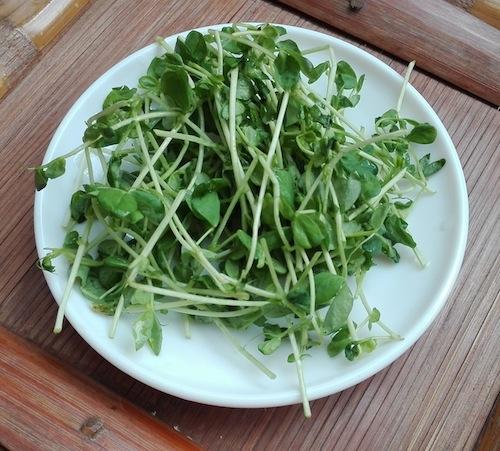 Gemüseverzehr und Obstkonsum erhöhen