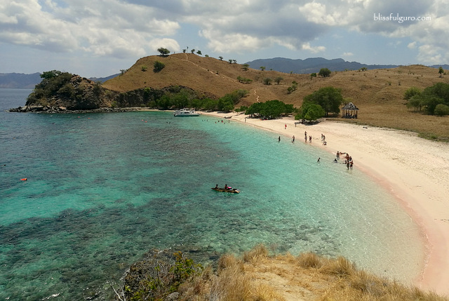 Komodo National Park Indonesia Pink Beach