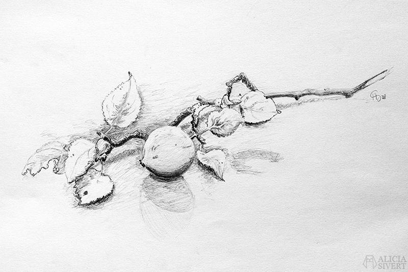 teckna teckning rita lära sig mig dig lär barn skapande utveckling kreativitet i barndomen vuxen vuxna blyerts stilleben äpple äpplen äppelkvist kvist blad löv äppelträd äppleträd äpplekvist