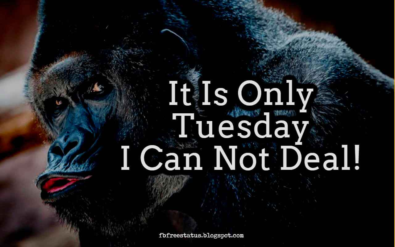 It Is Only Tuesday I Can Not Deal!.