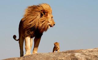leon y su cachorro