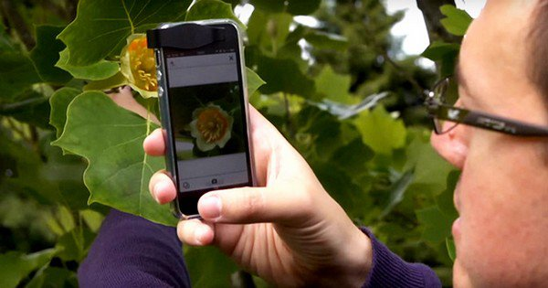 This New App Instantly Identifies Plants And Flowers, And It's Awesome