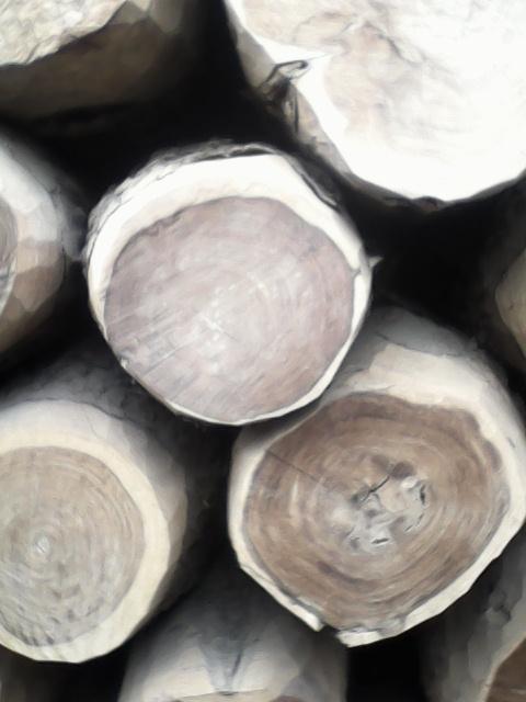 Wood For Sale In Pakistan Wood Sale In Pakistan We Deal All