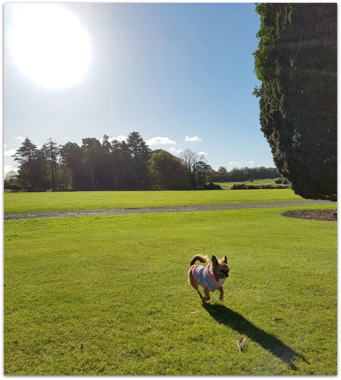 Dog Friendly Hotels in Ireland review Castlemartyr