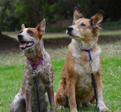 Heelers with limited slip collars