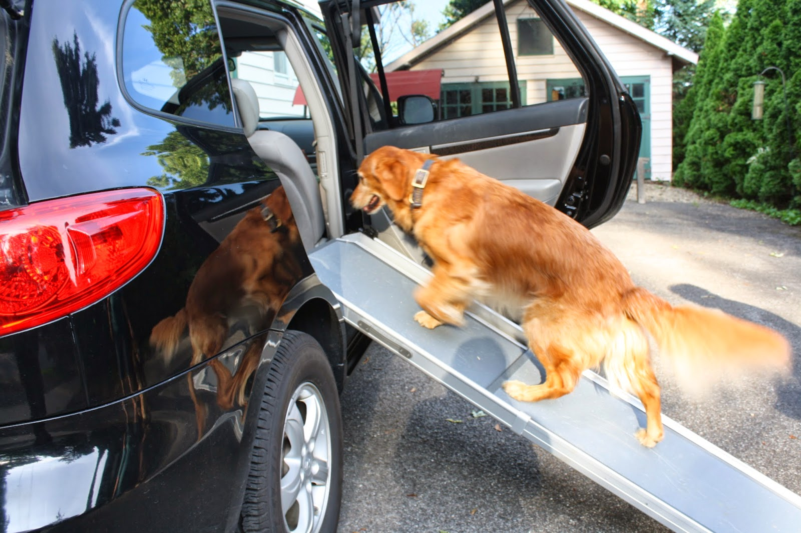 Pet Ramp For Car >> The Writer's Dog: Fun on the Go--Solvit Ramp and Side Door