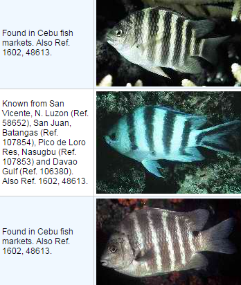 List of Reef-associated Fish in the Philippines
