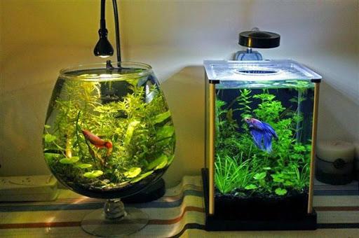 Hasil gambar untuk Ide Desain Aquarium Kreatif