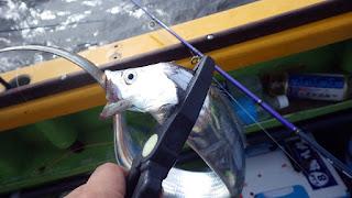 東京湾 太刀魚 ジギング