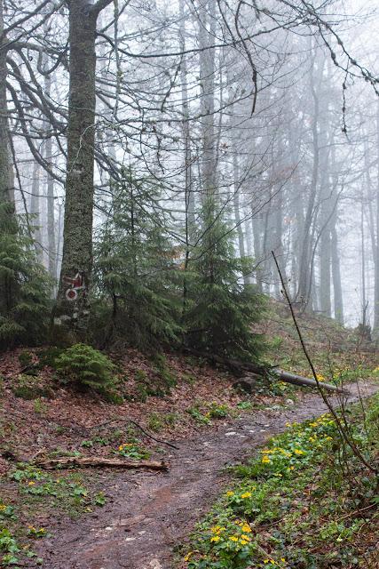 Köd, szél és eső egy pádisi erdőben