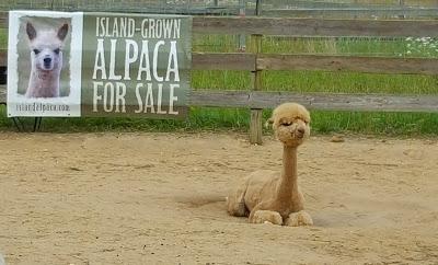 http://islandalpaca.com/alpaca_detail.php?id=158