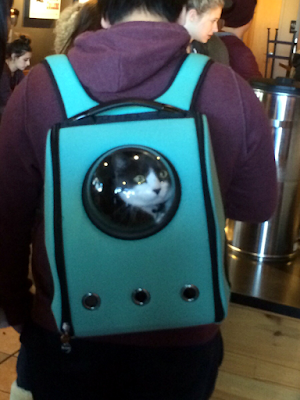 cat in a rucksack with viewing window