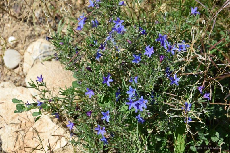 flores azules de plantas mediterráneas