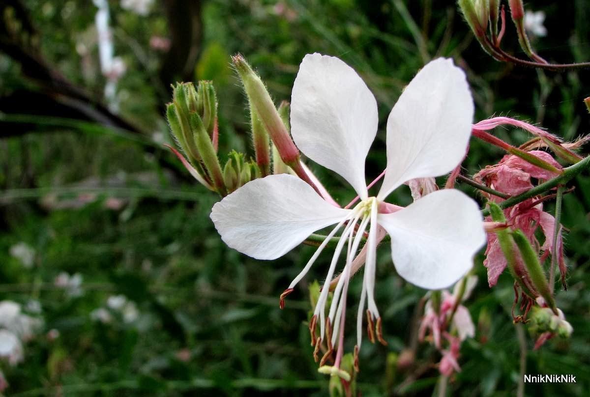 L 39 orto dei colori fiori profumati - Fiori gialli profumati ...