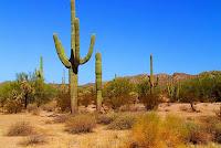 """""""Vivir en el desierto"""""""