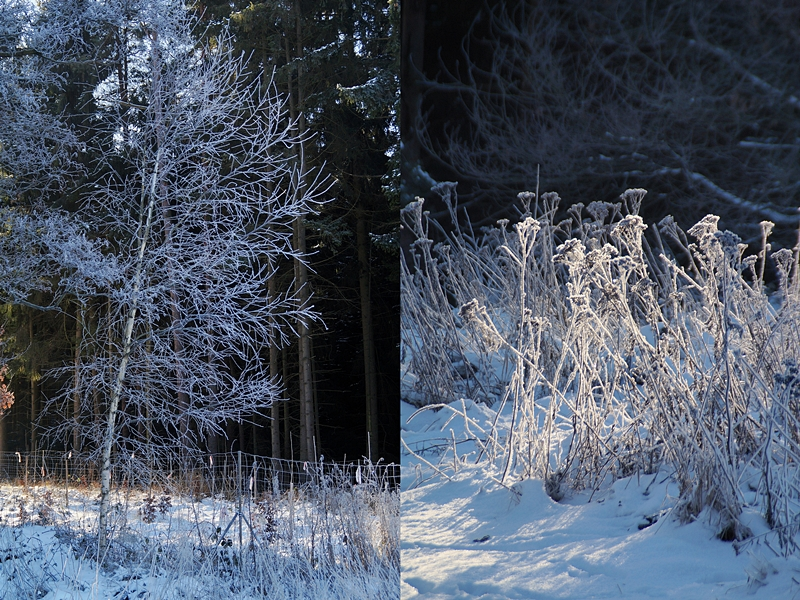Wald und Natur im sonnigen Winter bei Frost und Schnee | Tasteboykott