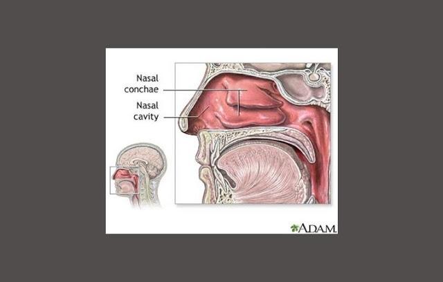 Pengertian Hidung, Struktur Hidung, Fungsi Hidung