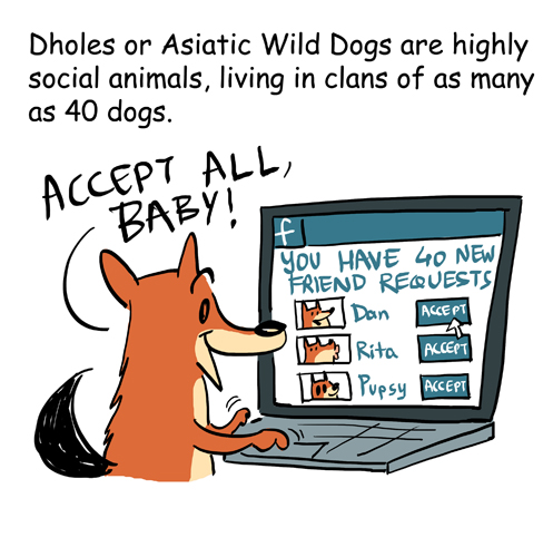 Green Humour: Some facts about Dholes
