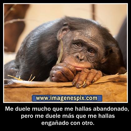 Frases Chistosas De Monos Imagui