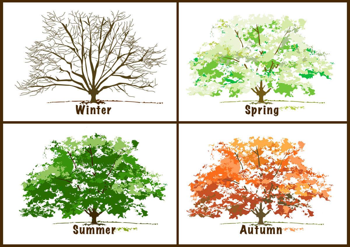 4th Grade English: The Four Seasons