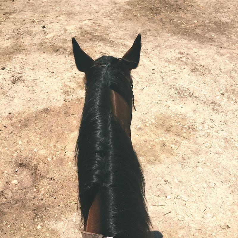 horseback riding rome