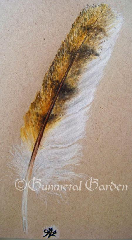 The Gunmetal Garden Barn Owl Feather Drawing